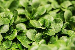 nigerian_vegetables_benefits